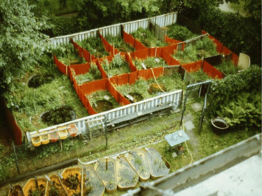 نمونه از مزرعه پرورش قورباغه