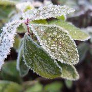 روشهای مقابله با سرما برای کشاورز و باغدار و دامدار